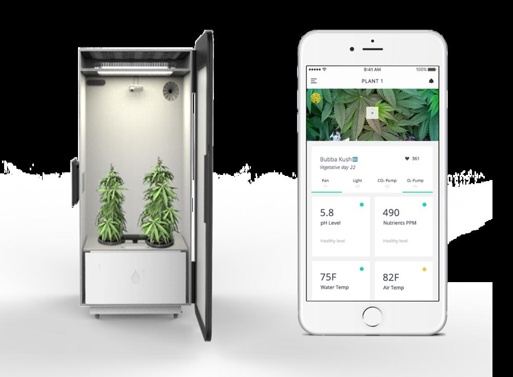 autmoated cannabis system leaf app